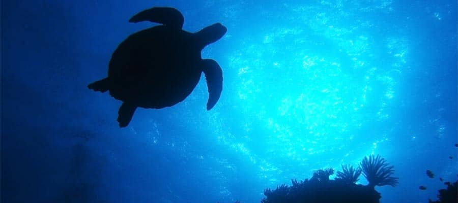 Sea Turtles on Cairns Cruises