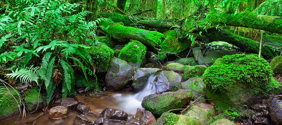 Lush Rainforests on Cairns Cruise