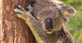 קיירנס (Yorkey's Knob), אוסטרליה