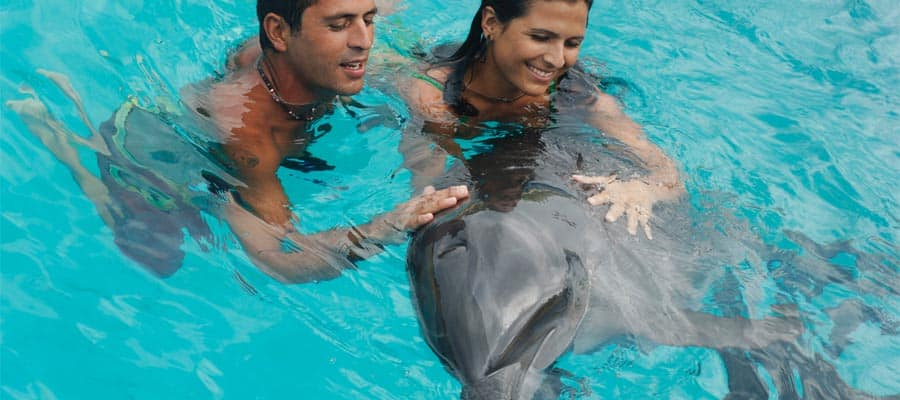 Swim with dolphins on your cruise to the Mexican Riviera