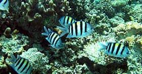 Three Reef Snorkel by Boat