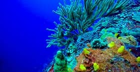 Coral Interactive Reef Restoration Program