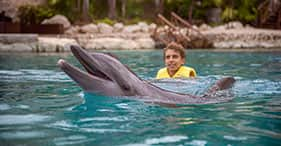 שחיה עם דולפינים אקסקלוסיבית הכל כלול