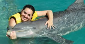 Dolphin Swim & Ride All Inclusive
