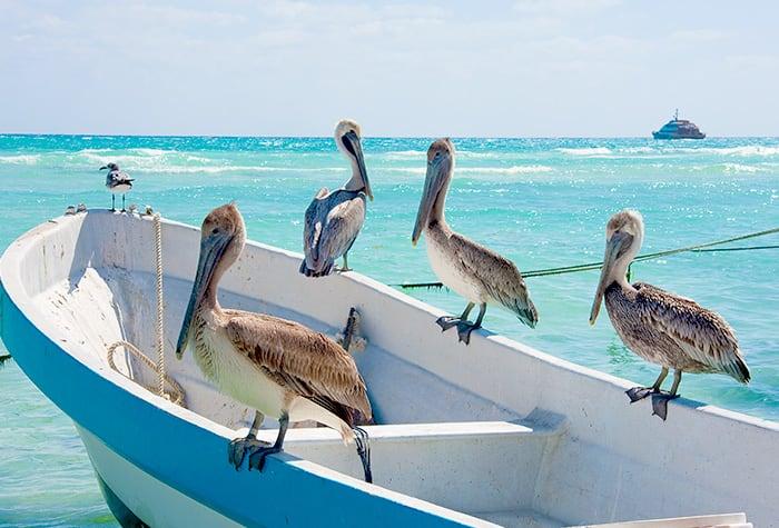 cruzeiros no caribe