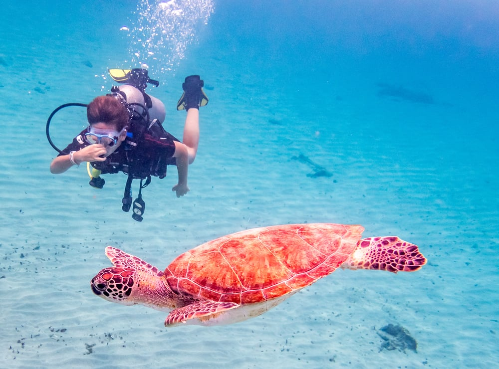 Diving & Snorkeling in Curacao