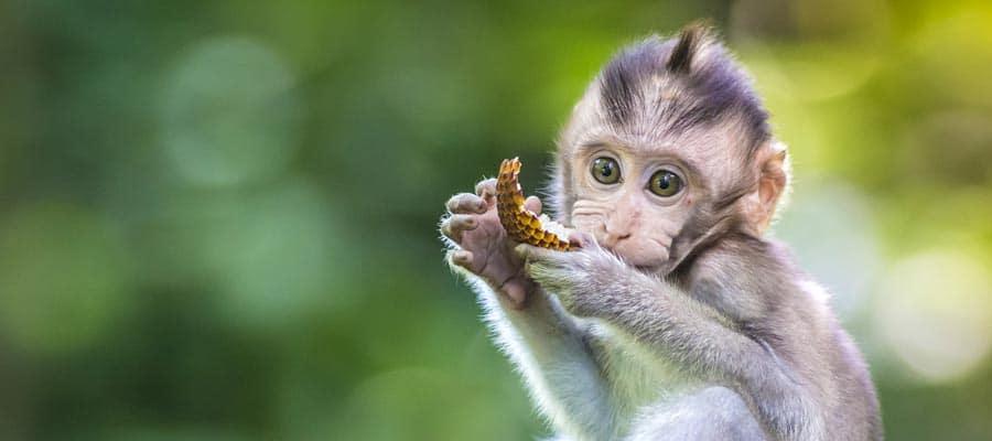 Cruzeiros para Benoa (Bali)