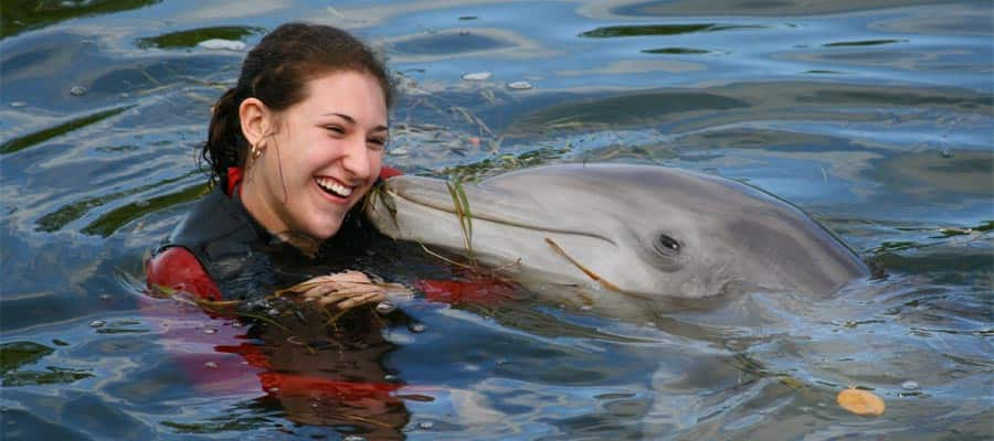 Swim with dolphins when you cruise to the Caribbean