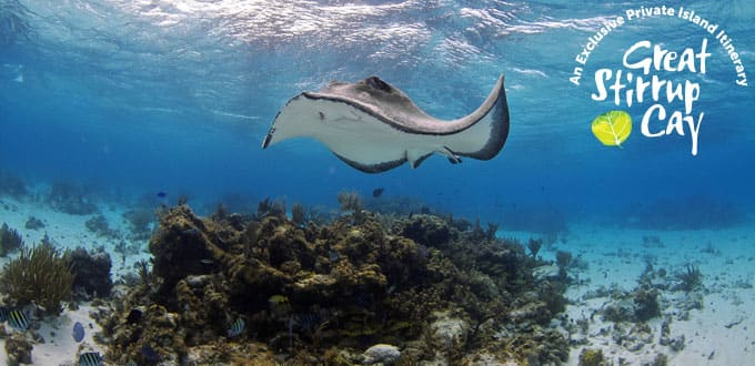 Enjoy stingray excursions on our own private island