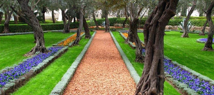 Olivenhain im Baha'i-Tempel in Haifa