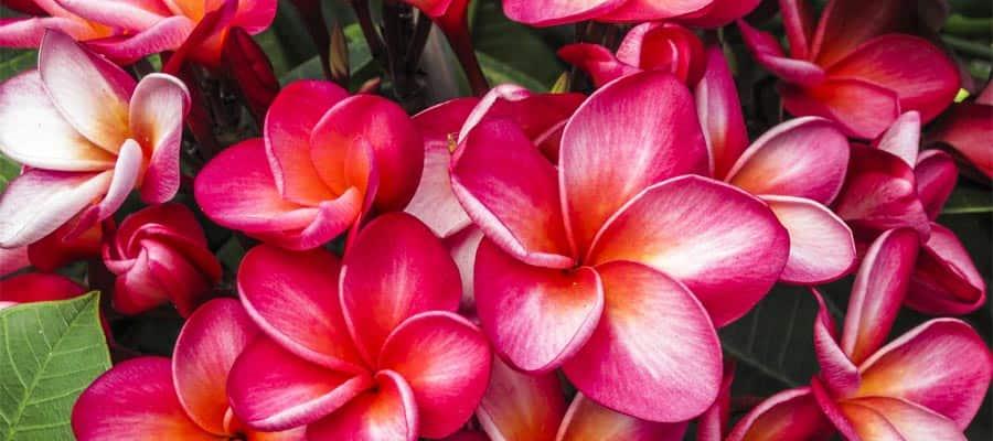 Malerische Landschaften auf Hawaiikreuzfahrten