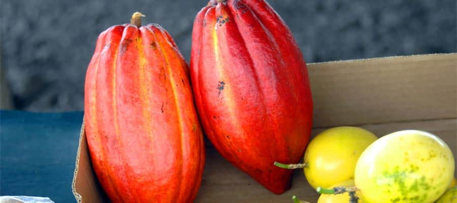 Prueba el cacao fresco en tu crucero por Hawái