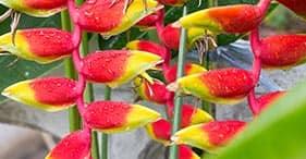 Hilo Coast & Botanical Gardens