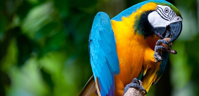 The wildlife in the Caribbean is a bird of a very different feather.