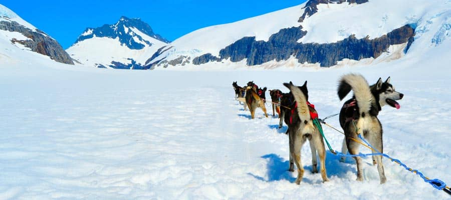 Dog Sledding on Alaska cruise