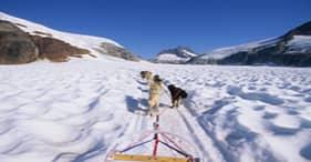Dogsledding on Mendenhall Glacier via Helicopter