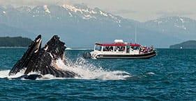 Alaska's Whales & Rainforest Trails