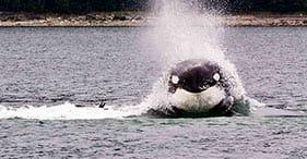 Whale Watching & Mendenhall Glacier Photo Safari