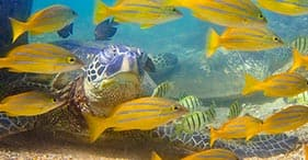 Big Island Snorkel