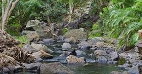 Secret Waterfalls of Kohala