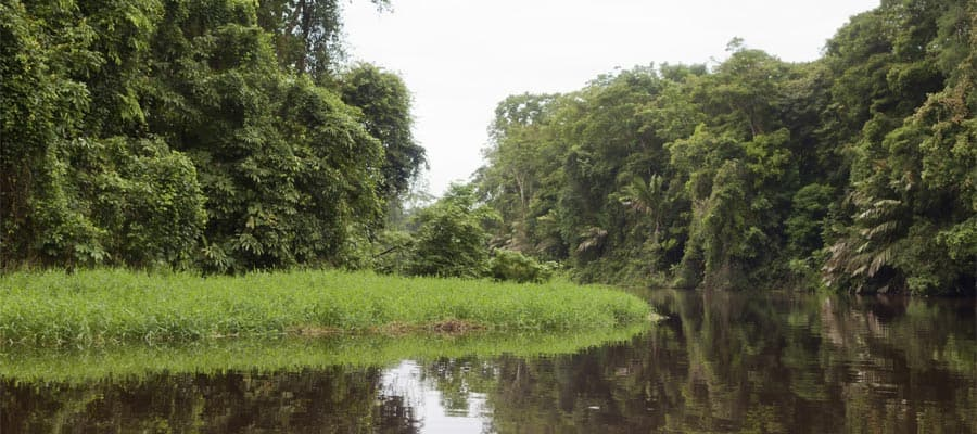 Tortuguero canals and jungle