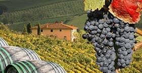 Pisa & A Taste of Tuscany