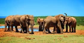 Mit dem Bus durch den Addo Elephant Park