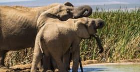 Addo Elephant Park mit einem 4X4-Fahrzeug