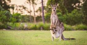 שמורת חיות הבר הילסוויל עם ריינג'ר