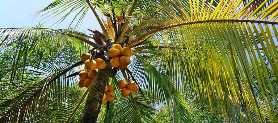 Relax under a tropical palm tree on a weekend cruise