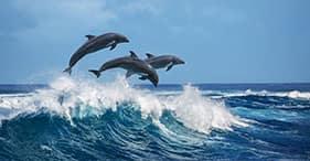 Expedición para ver delfines