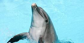 Encuentro con delfines en Moorea