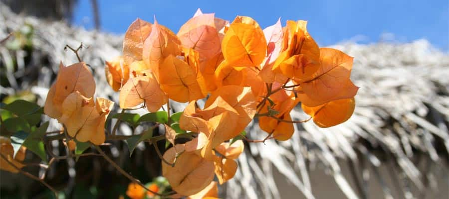 Orange flowers on your Mazatlan cruise