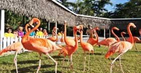 Ardastra Zoo & Gardens
