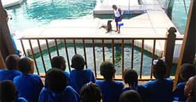 Blue Lagoon Sea Lion & Dolphin Observer