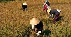 Vida rural de Nha Trang