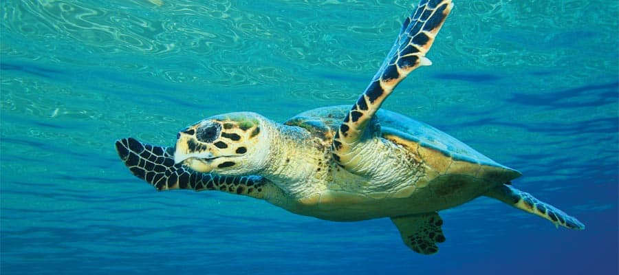 Swim with wildlife on our Bermuda cruises