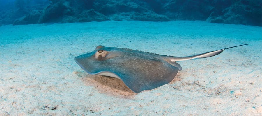Swim with stingrays in Great Stirrup Cay