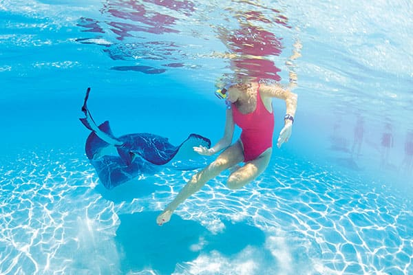 Swim with stingrays on a Caribbean cruise