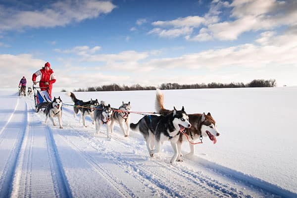 Dog Sledding Facts for Your Alaska Cruise
