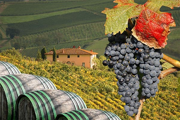 Tuscany Vineyard on your cruise