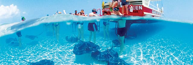 Stay active while cruising with an exciting shore excursion like swimming with the rays