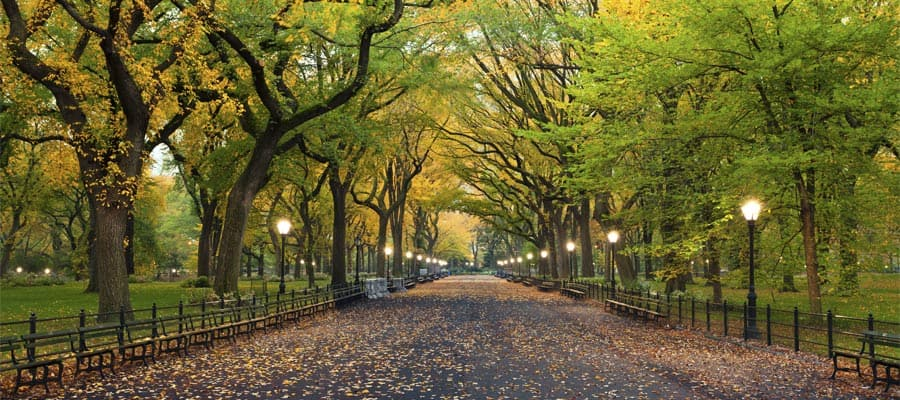 Cruise to New York and stroll Central Park
