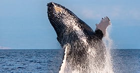 Maui Whale Watch & Lahaina On Your Own