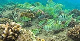 Lanai Wildside Raft Snorkel (May - Nov Only)