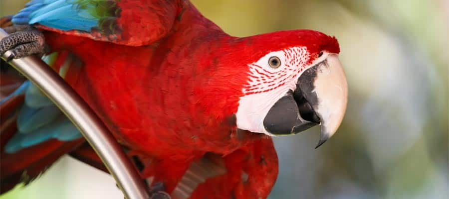 Bird watching on your Caribbean cruise