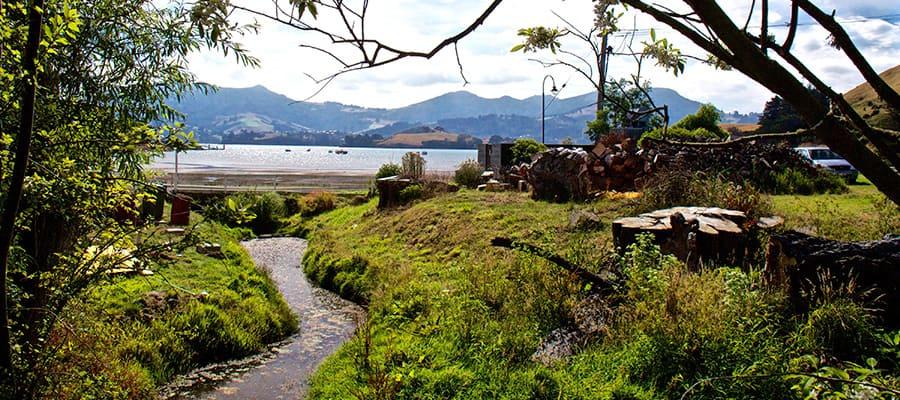 Vues pittoresques - à découvrir lors de votre croisière à Dunedin.