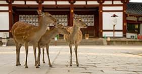 奈良&大阪発見の旅