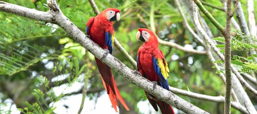 Friendly parrots