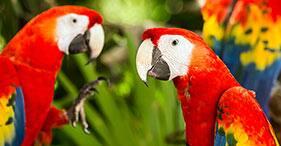 Scarlet Macaw Sanctuary & Puntarenas Sightseeing